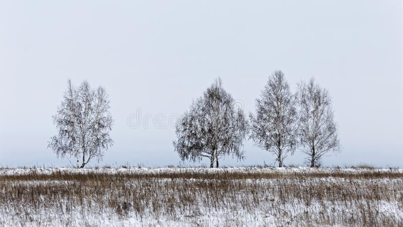 Winter landscape with a bare trees. Against a white sky background royalty free stock photos