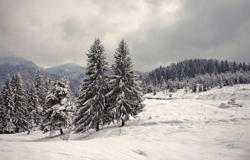 Snow. Winter landscape on the mountain. Snow. Winter landscape on base of the mountain stock photos