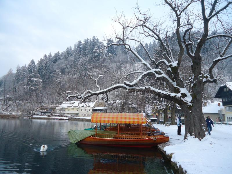 Winter landscape in Bled Lake, Slovenia royalty free stock photo