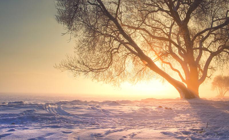 Winter landscape with bright warm sunlight. Christmas background of nature on sunset with vibrant sun. Amazing foggy winter scene stock images