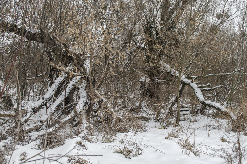 Winter landscape. With broken old trees royalty free stock photos