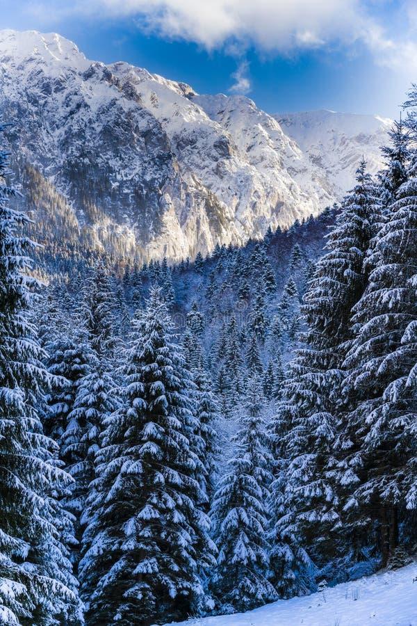 Winter landscape with Carpati Piatra Craiului mountain. Beautiful winter landscape with Carpati Piatra Craiului mountains in Romania stock photography
