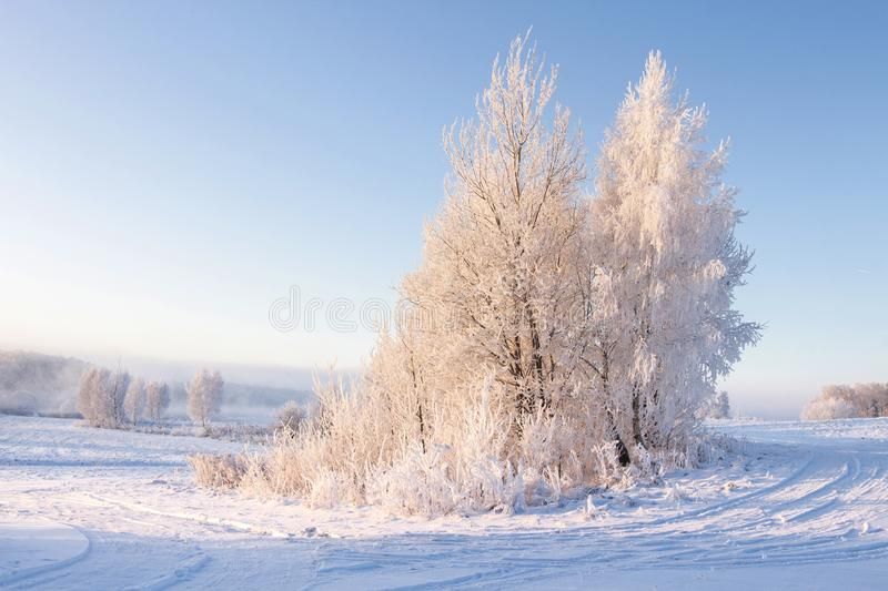 Winter landscape. Clear winter morning. Tree with hoarfrost on white snow against blue clear sky. Frosty winter nature. Warm sunlight on tree. Christmas royalty free stock photo