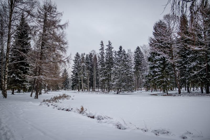 Winter landscape in cloudy weather. Winter Park. Expanses of Russia stock photo