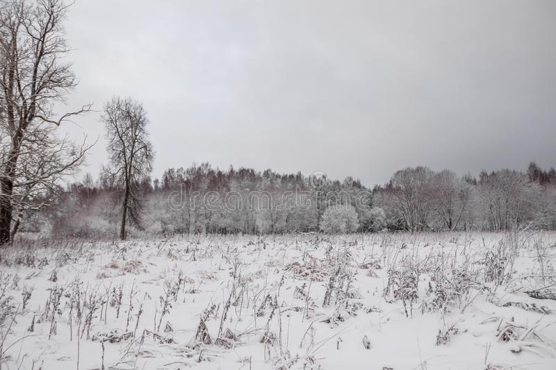 Winter landscape in cloudy weather. Winter Park. Expanses of Russia royalty free stock photos