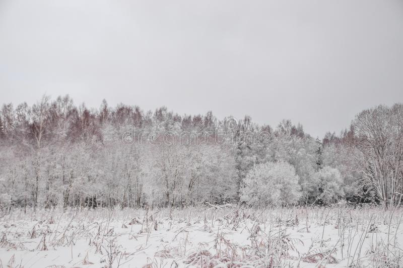 Winter landscape in cloudy weather. Winter Park. Expanses of Russia stock image