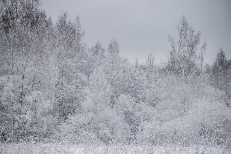Winter landscape in cloudy weather. Winter Park. Expanses of Russia stock photography
