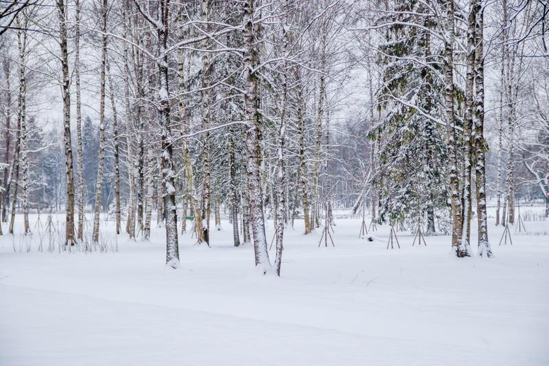 Winter landscape in cloudy weather. Winter Park. Expanses of Russia stock photos