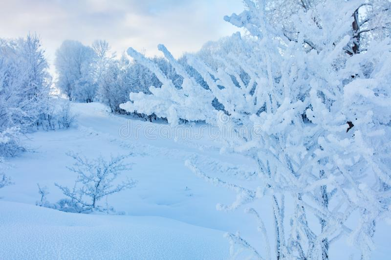 Winter landscape. Cold day stock photography