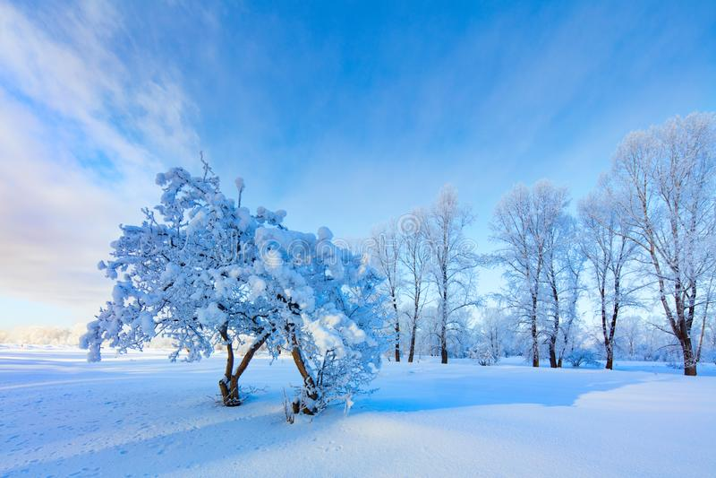 Winter landscape. Cold day stock photo