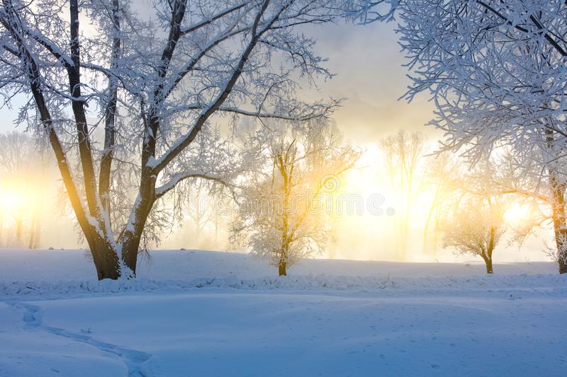 Winter landscape. Cold day stock images