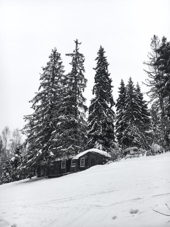 Winter landscape in the coniferous forest. Abandoned old wooden house, the Forester`s hut on a snowy meadow in the Carpathian mou royalty free stock images