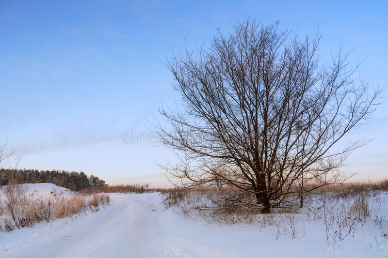 Winter landscape. Winter country road. Traces of cars in the snow. A tree with wide branches against the background royalty free stock photo