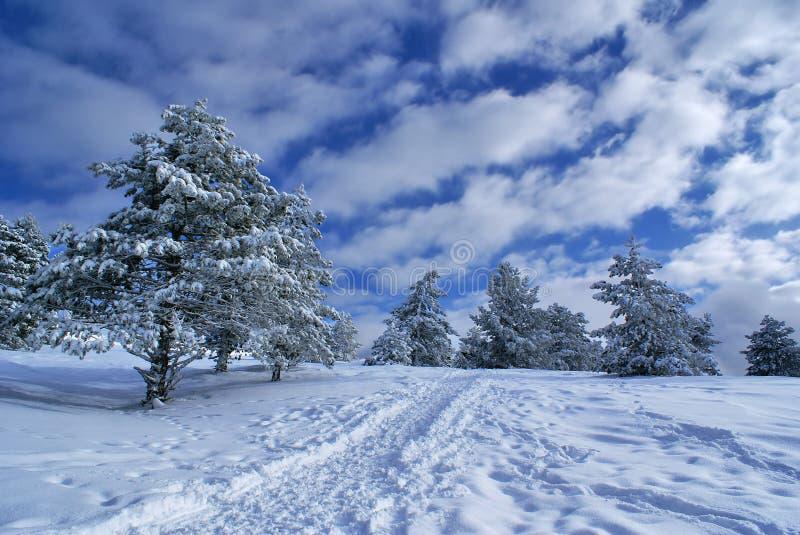 Winter landscape D stock photos