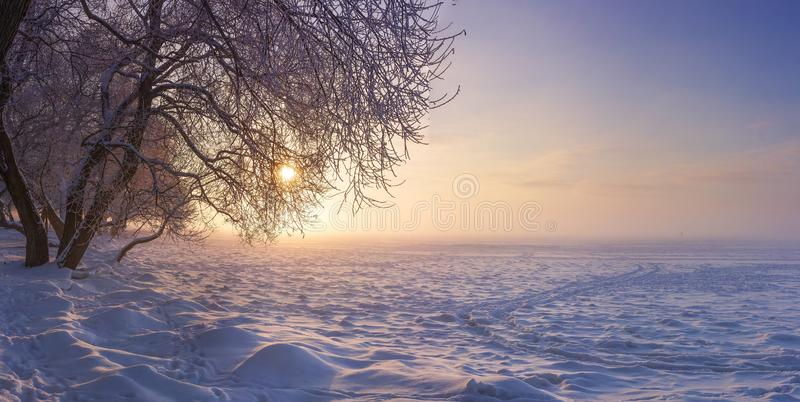 Winter landscape in the evening at sunset. Snow, frost in january. Winter nature background. Trees in sunlight royalty free stock photography