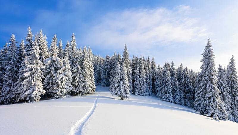 Winter landscape with fair trees under the snow. Scenery for the tourists. Christmas holidays. stock images