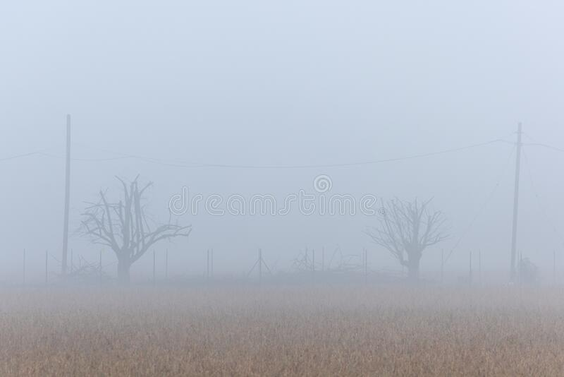 Winter landscape with fog, Po Valley, Italy. A winter landscape with fog, Po Valley, Italy stock photo