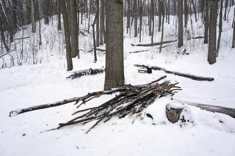 Chopped branches prepared for a fire in the winter forest stock photos
