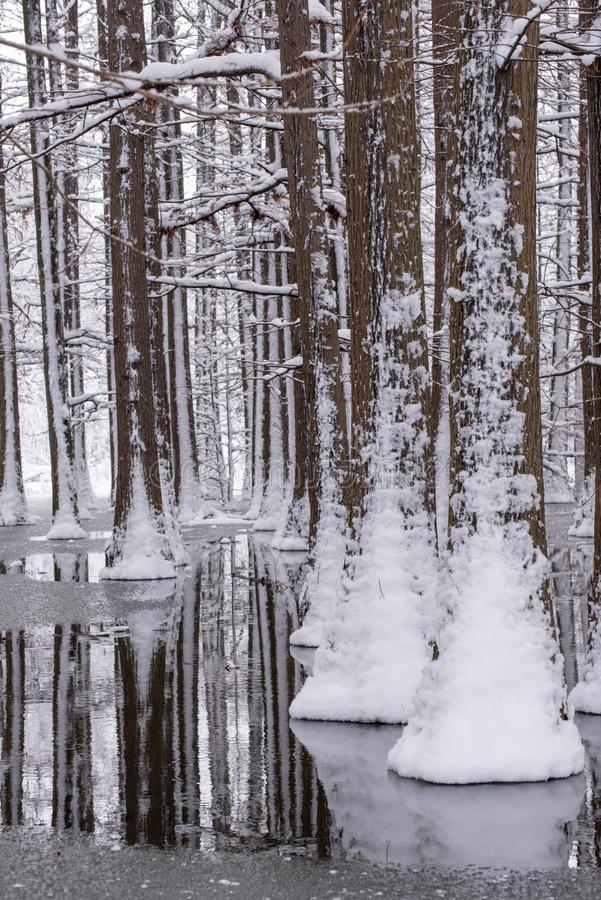 Winter time landscape in the forest with fresh snow , Romania , Europe. Winter landscape in the forest with fresh snow , Romania , Europe stock photos