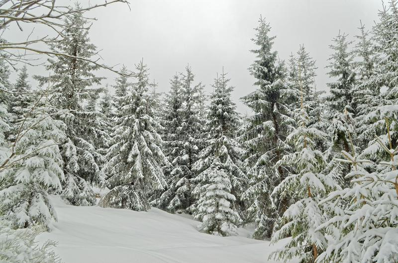 Winter landscape in a forest in Harz, Germany. Winter landscape in a forest in Harz mountains region, Germany. This photo was taken from Sonnenberg ski piste royalty free stock photo