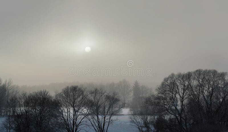 Winter landscape - forest and meadow in fog stock photo