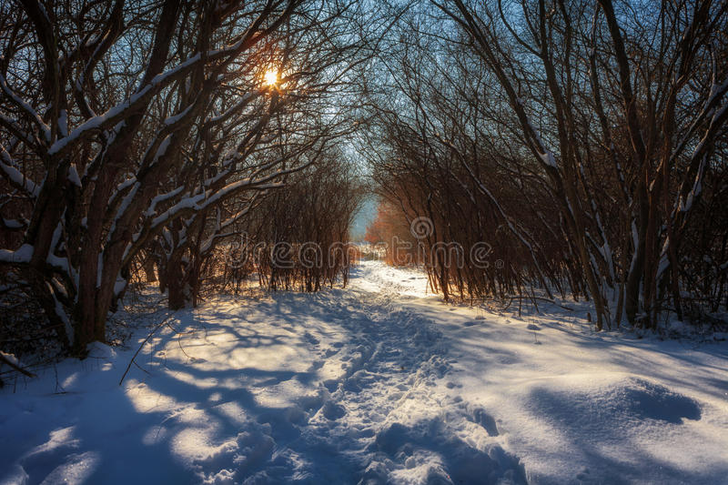 Winter landscape of a forest with path at sunset royalty free stock photos