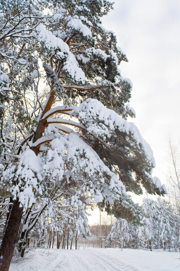 Winter landscape in the forest with skiway royalty free stock images