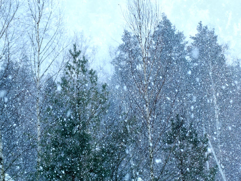 Download Winter Landscape Forest In Snow Frost Stock Photo - Image: 83705166