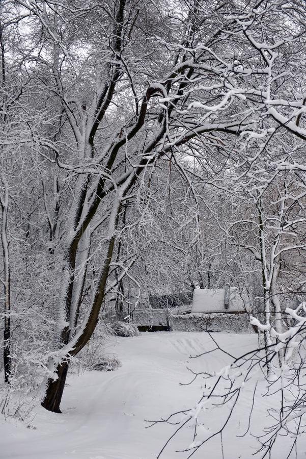 Winter landscape - forest snowy winter trees in cloudy winter weather. Winter nature tranquil scene, winter trees covered with snow in the winter forest stock photo
