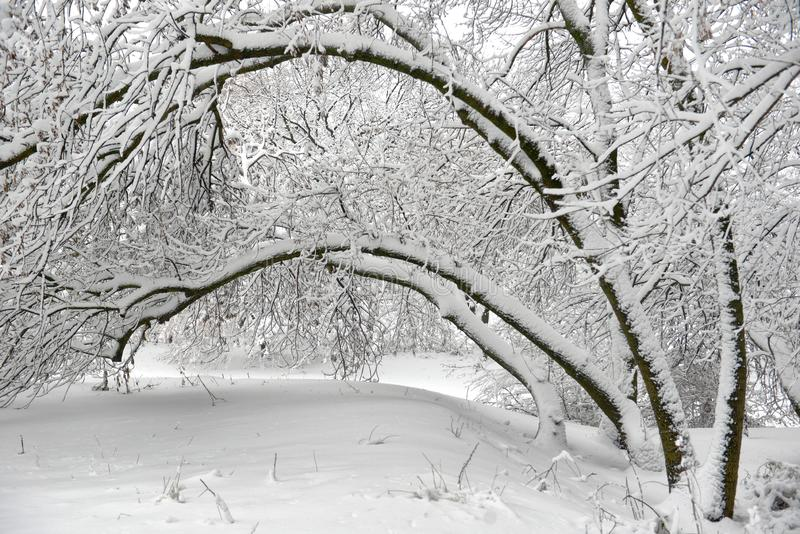 Winter landscape - forest snowy winter trees in cloudy winter weather. Winter nature tranquil scene, winter trees covered with snow in the winter forest royalty free stock photo