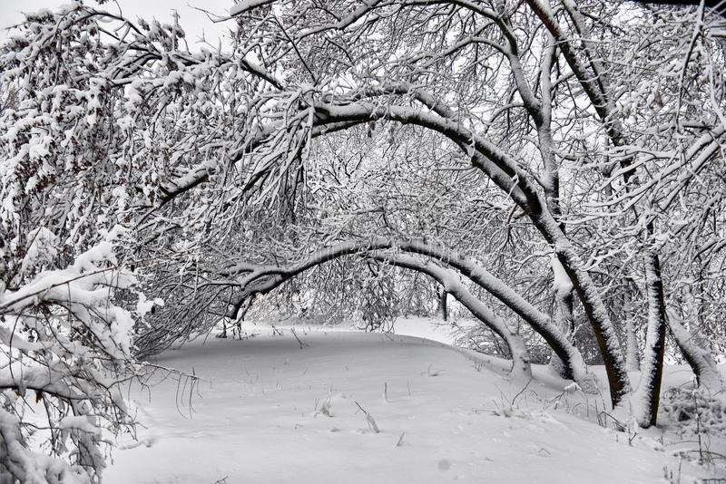 Winter landscape - forest snowy winter trees in cloudy winter weather. Winter nature tranquil scene, winter trees covered with snow in the winter forest royalty free stock photos