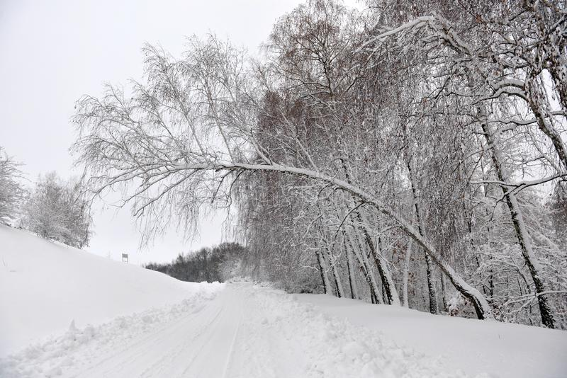 Winter landscape - forest snowy winter trees in cloudy winter weather. Winter nature tranquil scene, winter trees covered with snow in the winter forest royalty free stock photography
