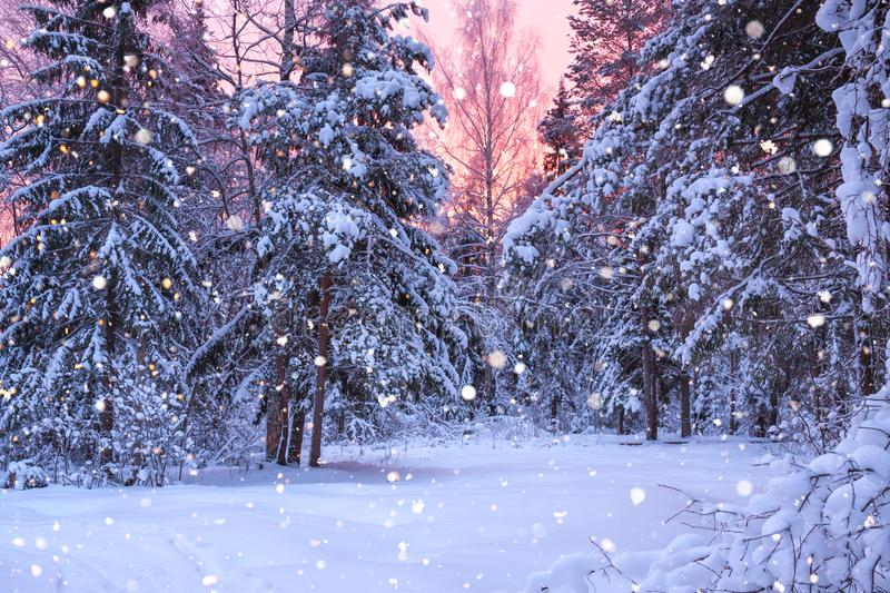 Winter landscape with forest, trees and sunrise. Beautiful winter landscape with forest, trees and sunrise. winterly morning of a new day. purple winter royalty free stock images