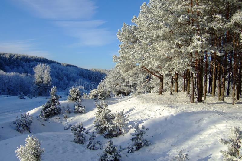Winter landscape with forest and trees. winterly morning of a new day with a lot of snow. Beautiful winter landscape with forest and trees. winterly morning of a stock image