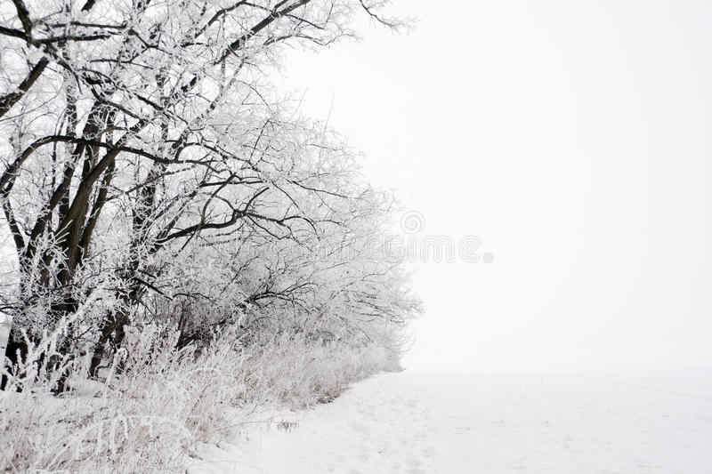 Winter landscape of frosted tree stock photography