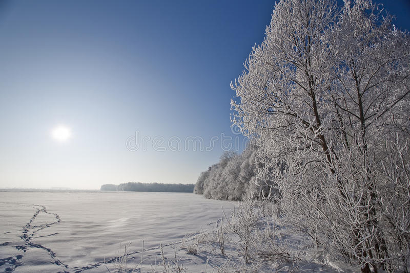 Download Winter  Landscape With Frosted Trees And Rime Stock Photo - Image: 12802052