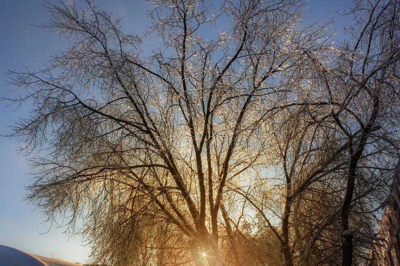Winter landscape of a tree covered with ice on the background of sunrise. frosty wood in snow in the sunny morning. Tranquil. Winter landscape with frosty tree royalty free stock photography