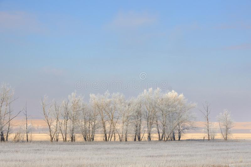 Winter landscape with frozen bare trees on cleaned agricultural field covered with frozen dry yellow grass under blue sky royalty free stock photos