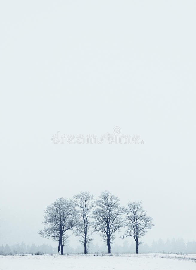 Winter landscape with frozen group of trees royalty free stock images