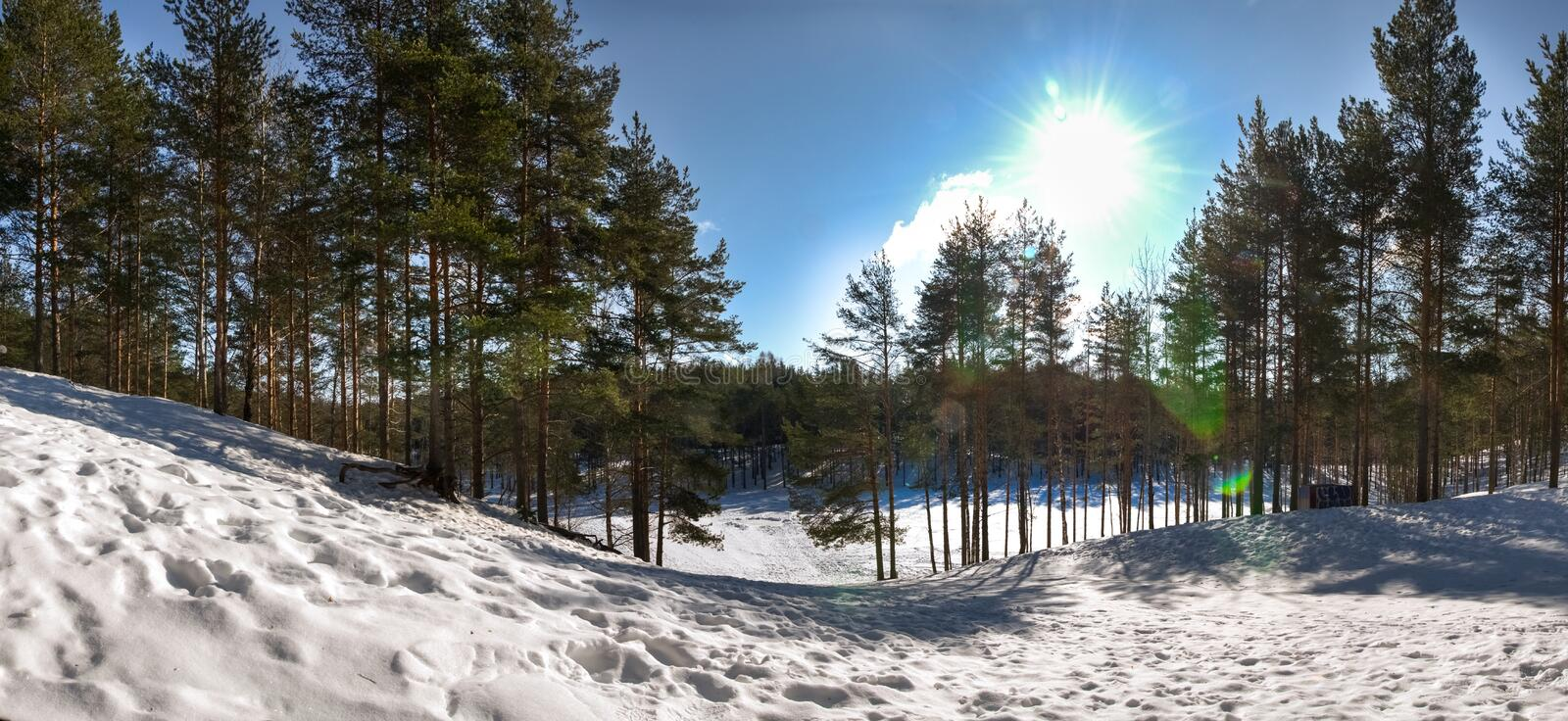 Winter landscape. Frozen lake, snow and pine trees. Panorama. Winter landscape. Frozen lake, snow and pine trees stock image