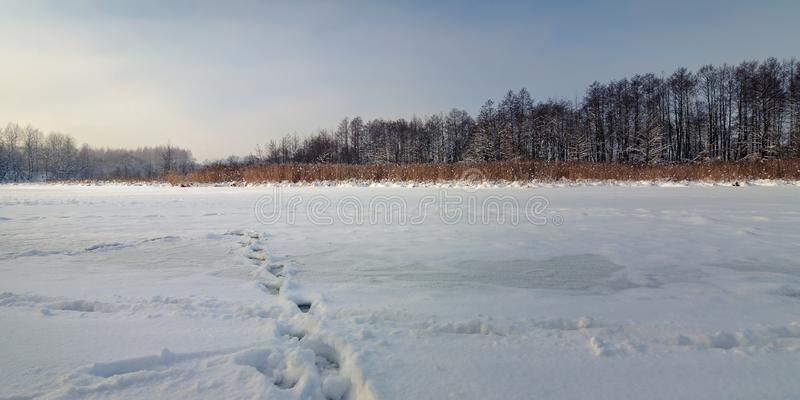Winter landscape. frozen river, lake under snow with reeds and bare trees in clear weather. Beautiful winter landscape. frozen river, lake under snow with royalty free stock photos