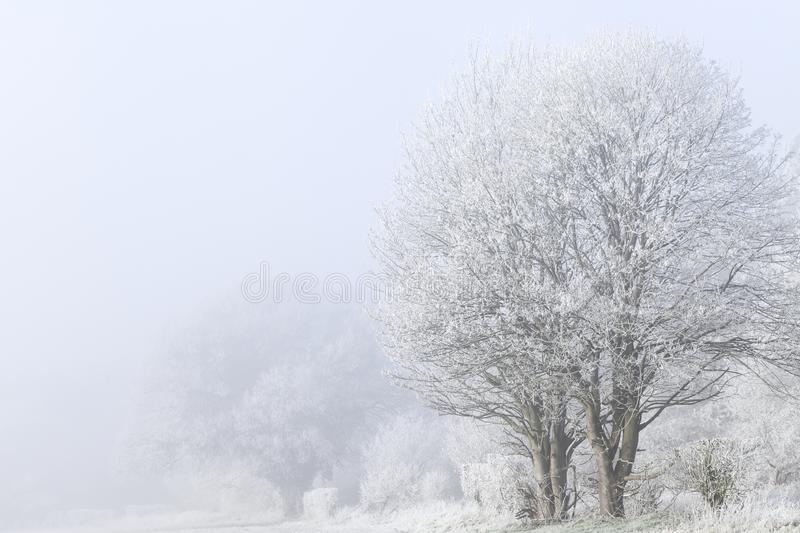 Winter landscape with frozen trees anf fog. Stunning winter landscape with frost covered trees and freezing fog. Rural scene with white mist and ice covered stock photography