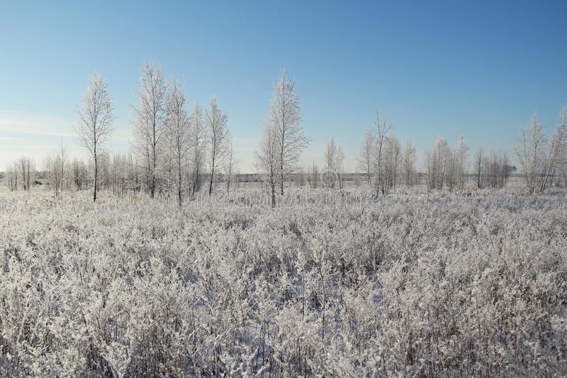 Winter landscape with frozen trees and blue sky. Russia royalty free stock photos