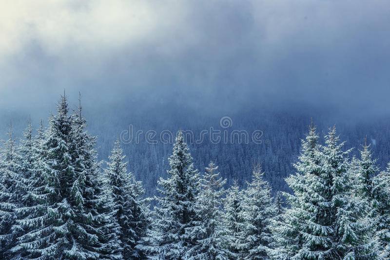 Winter landscape glowing by sunlight. Dramatic wintry scene. Car. Pathian, Ukraine, Europe. Happy New Year. In anticipation of the holidays stock image