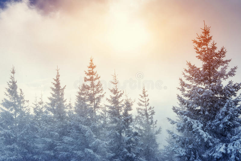 Winter landscape glowing by sunlight. Dramatic wintry scene. Car. Pathian, Ukraine, Europe. Happy New Year. In anticipation of the holidays royalty free stock image