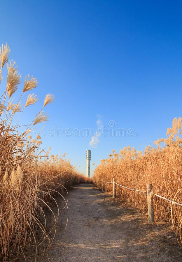Winter landscape of Haneul Park. Another name is Skypark, in Seoul, Korea royalty free stock photos