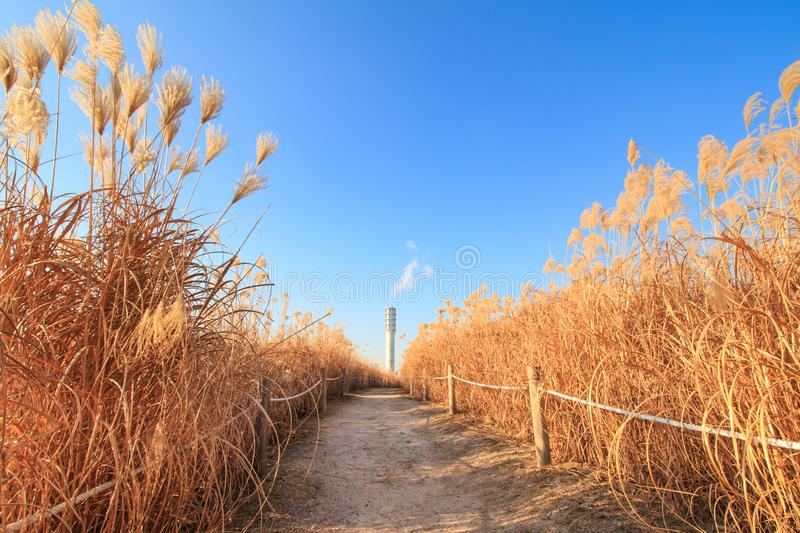 Winter landscape of Haneul Park. Another name is Skypark, in Seoul, Korea stock image