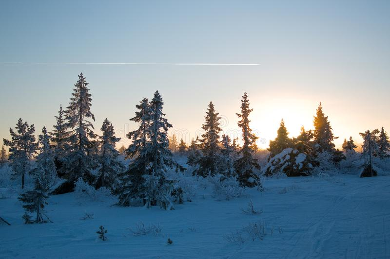 Winter landscape in Hedmark county Norway. Snow covered ground and beautiful frozen trees. At Sunset in a december day stock photos