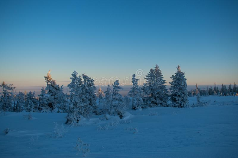 Winter landscape in Hedmark county Norway. Snow covered ground and beautiful frozen trees. At Sunset in a december day stock photo