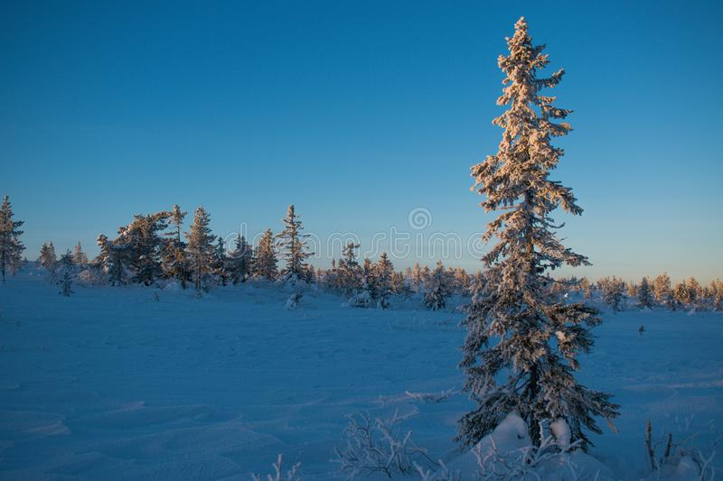 Winter landscape in Hedmark county Norway. Snow covered ground and beautiful frozen trees. At Sunset in a december day royalty free stock photo